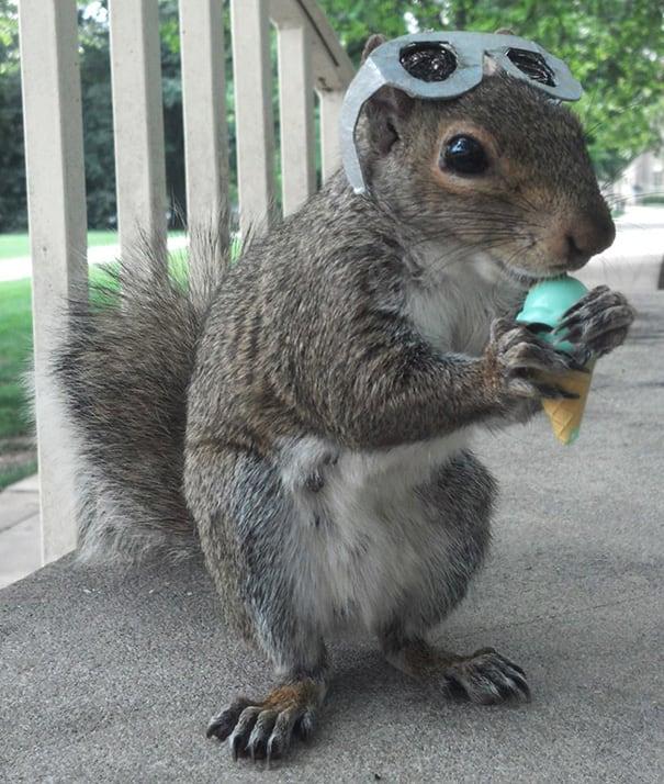 costume-squirrel-whisperer-sneezy-nary-krupa-55