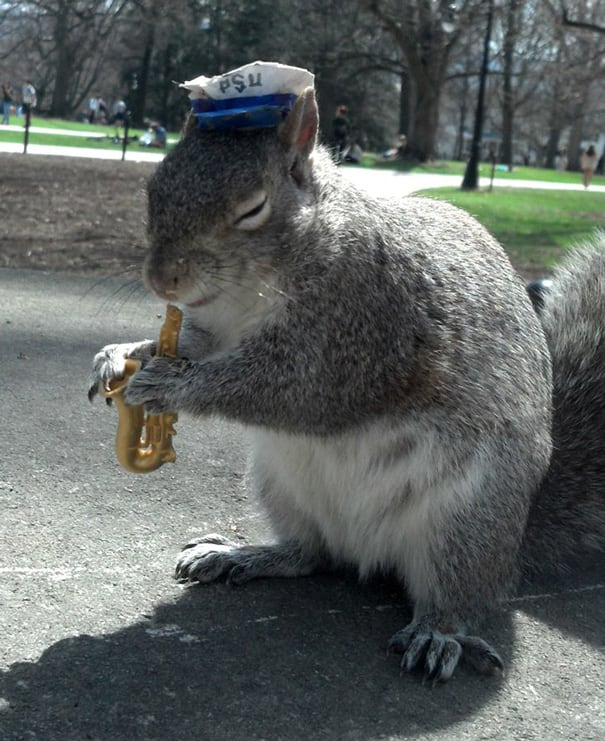 costume-squirrel-whisperer-sneezy-nary-krupa-68