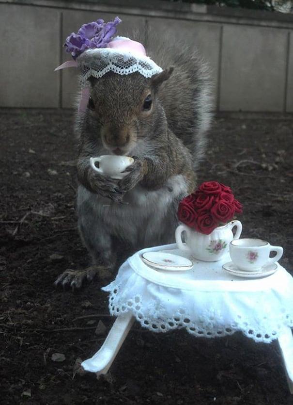 costume-squirrel-whisperer-sneezy-nary-krupa-69