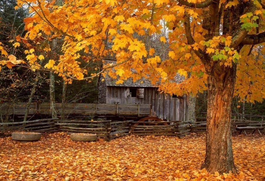 the-most-beautiful-abandoned-cabins-waiting-for-owners-to-come-17