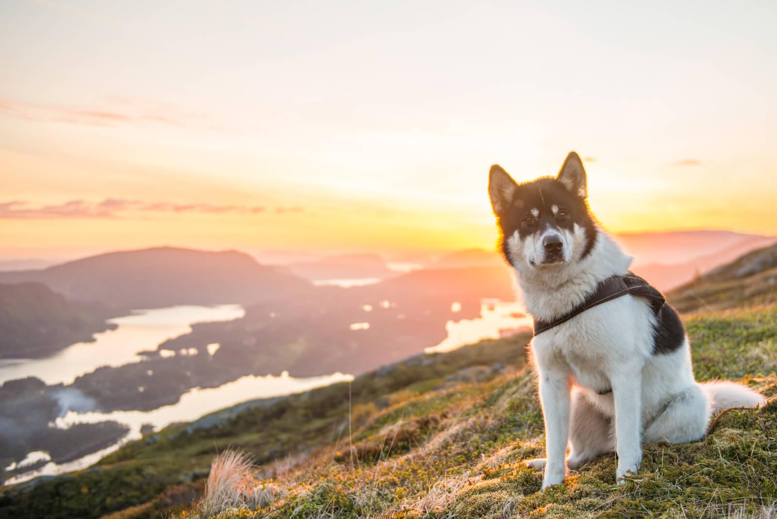 Akiak-the-adventure-dog-freeyork-13