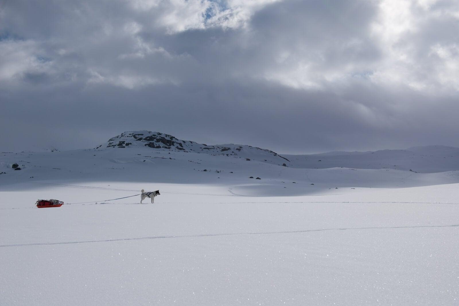 Akiak-the-adventure-dog-freeyork-6