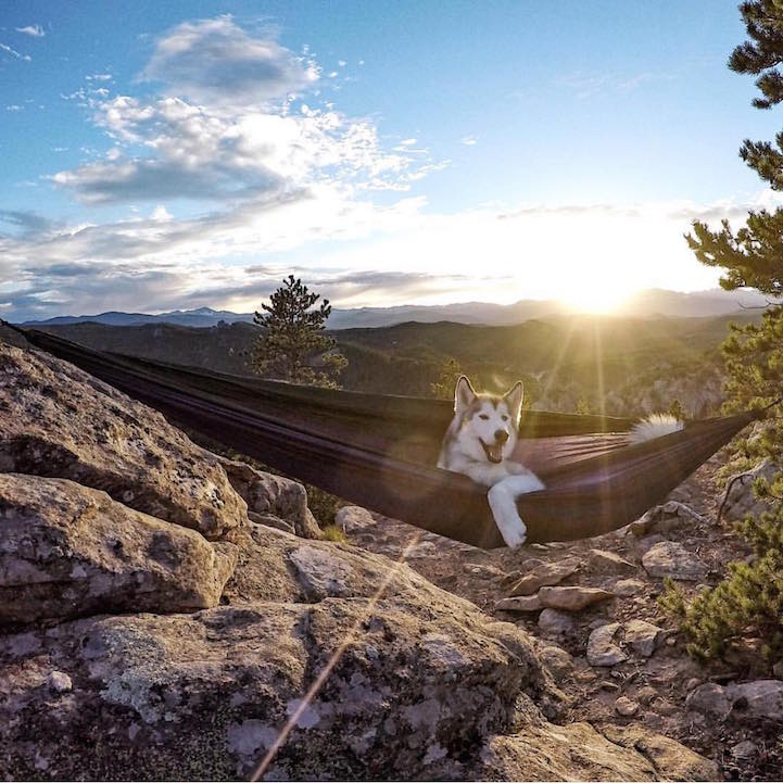 campingwithdogs6