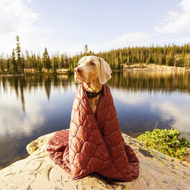 campingwithdogs7