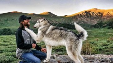 dog nature photography loki wolfdog kelly lund 1 1