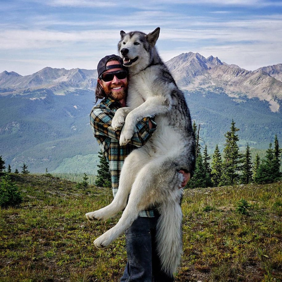 dog-nature-photography-loki-wolfdog-kelly-lund-11