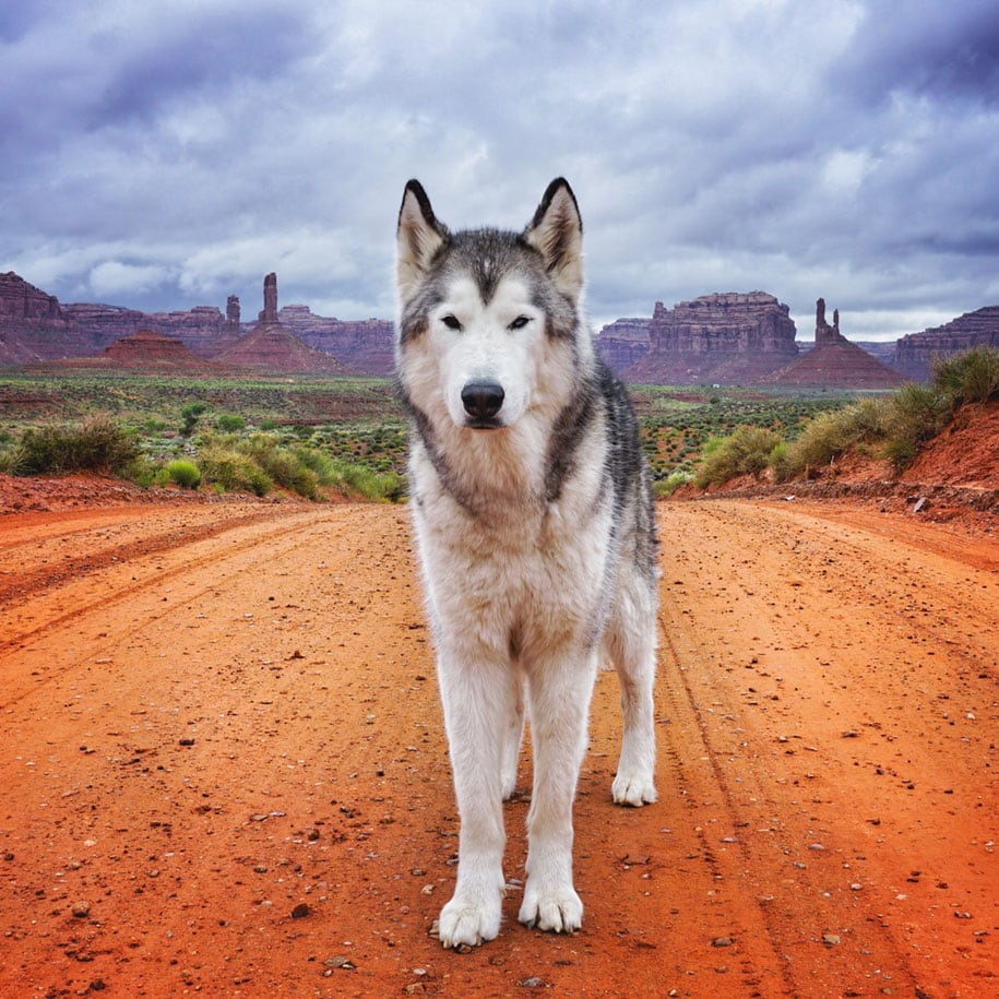 dog-nature-photography-loki-wolfdog-kelly-lund-35