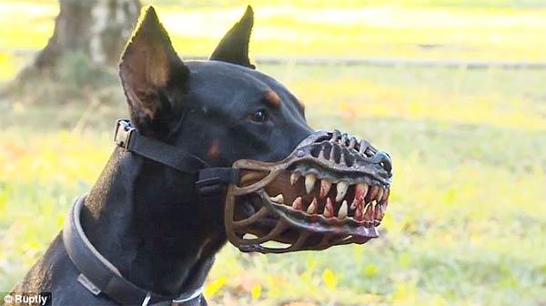 Terrifying Dog Muzzle