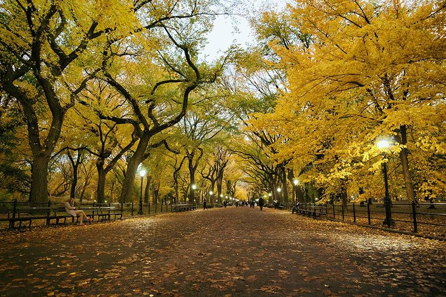 Poet's Walk, Central Park (1)