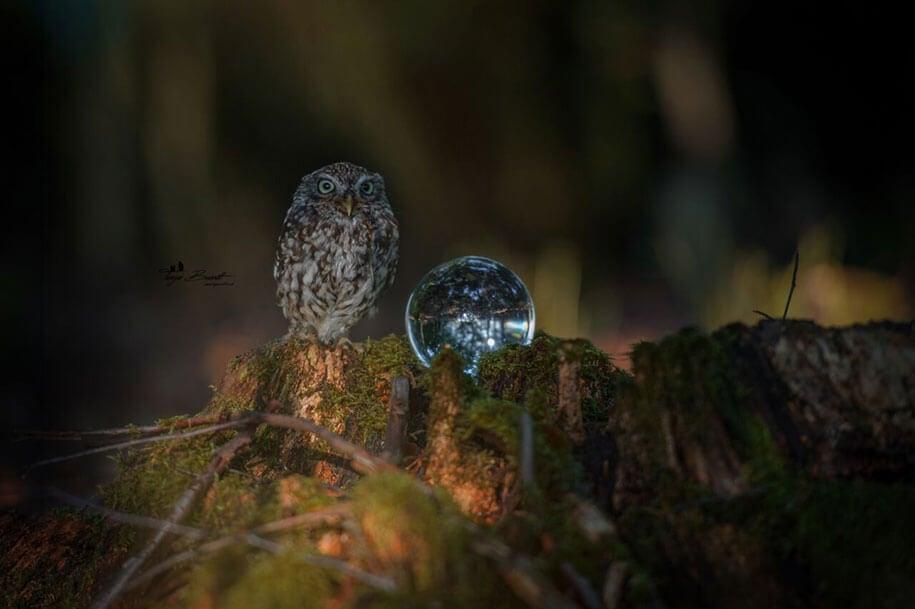 animal-photo-owl-hide-rain-mushroom-podli-tanja-brandt-12