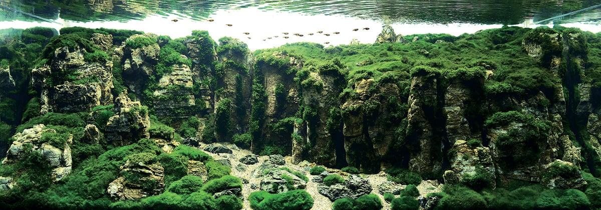 #16 张大东, China / Courtesy IAPLC & Aquabase