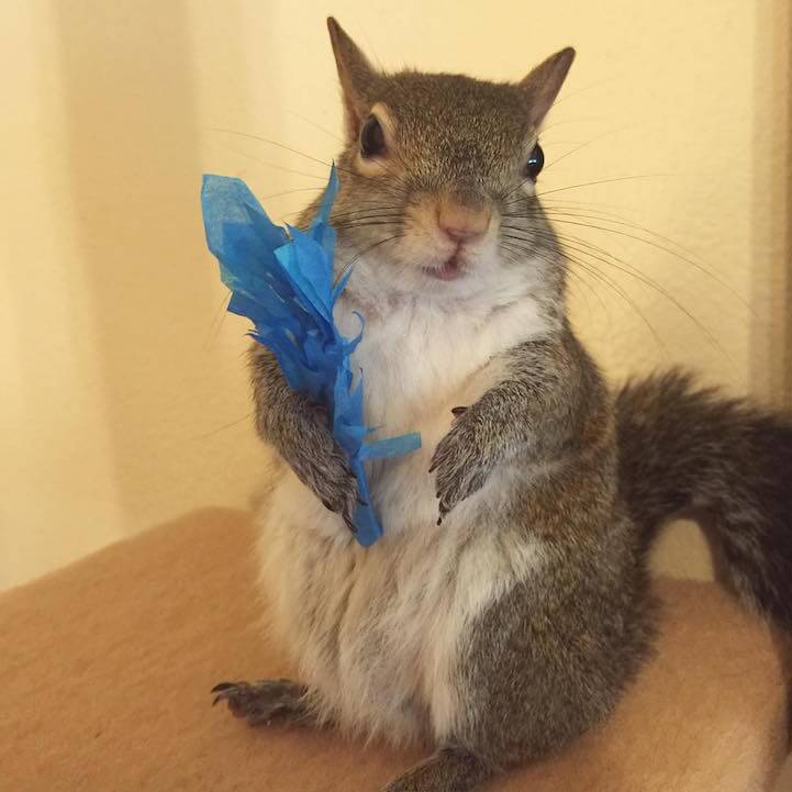 jillsquirrel3