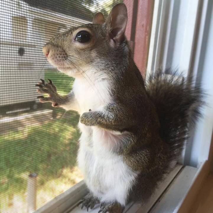 jillsquirrel4