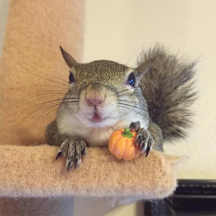 jillsquirrel5