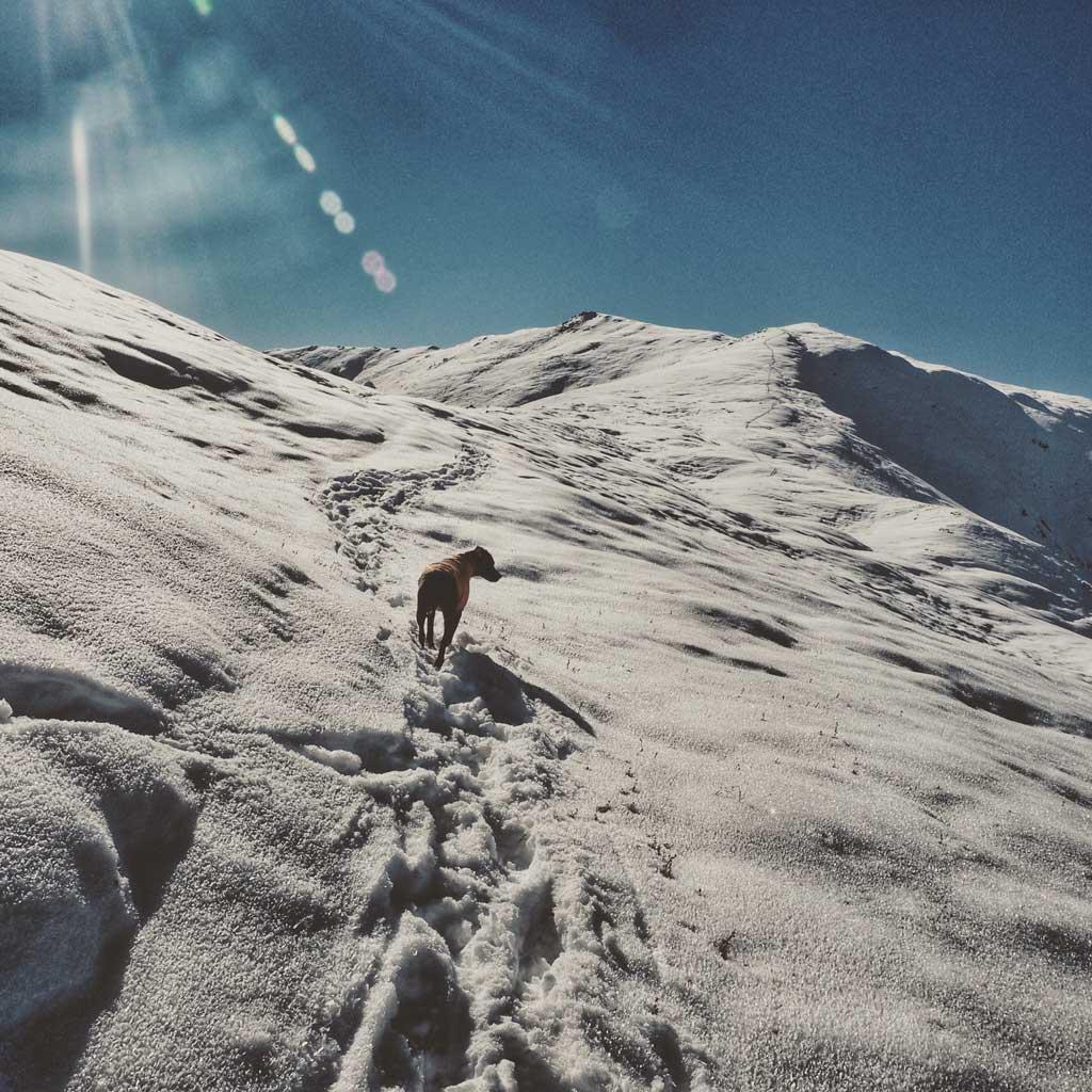 Hiking up Pioneer Ridge Trail in Alaska