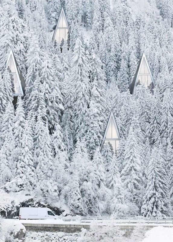 Primeval-forest-freeyork-8