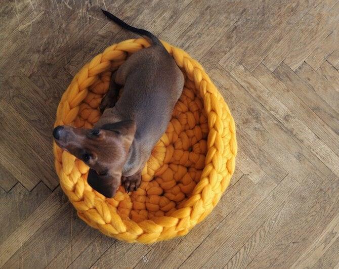 chunky-knits-pets-ohhio-anna-mo-freeyork-5