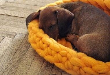 chunky-knits-pets-ohhio-anna-mo-freeyork-6