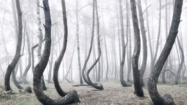 crooked forest freeyork 1 1