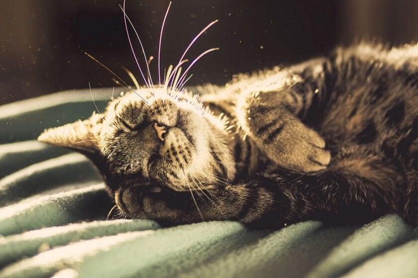 felicity-berkleef-cat-10