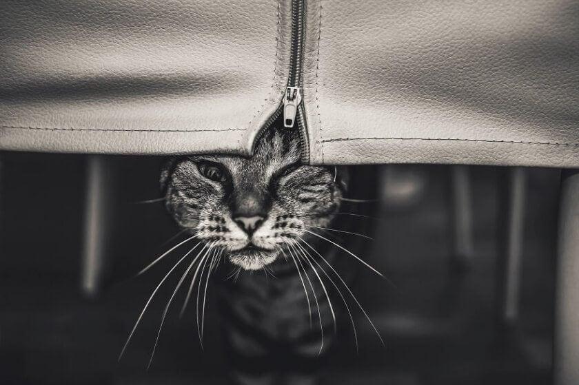 felicity-berkleef-cat-11