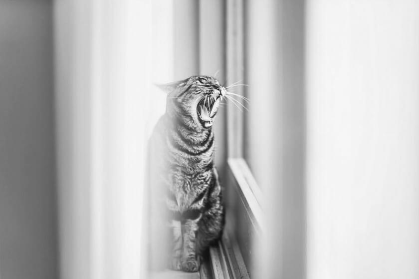 felicity-berkleef-cat-12