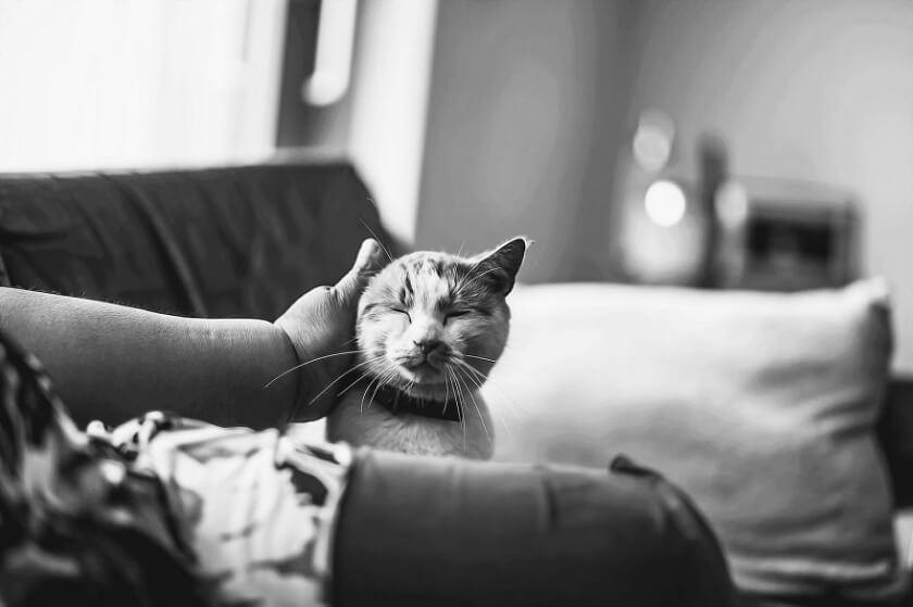 felicity-berkleef-cat-13