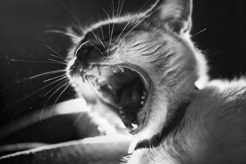 felicity-berkleef-cat-14