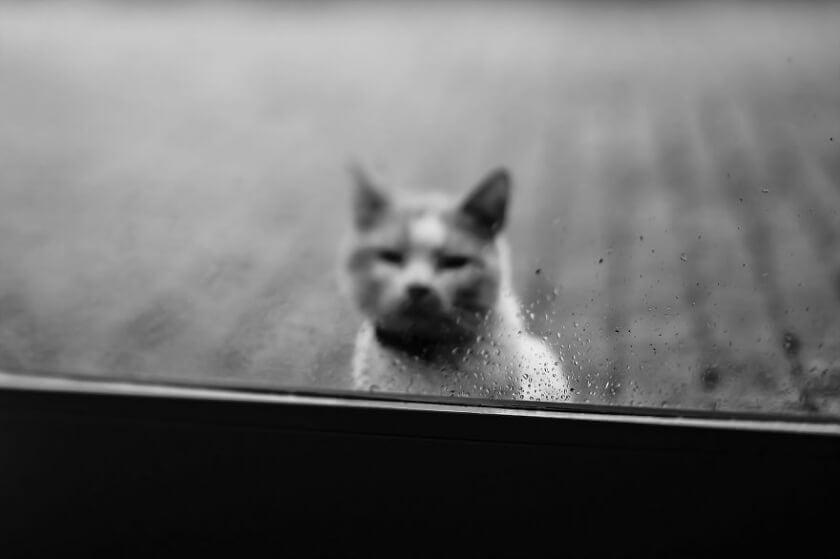 felicity-berkleef-cat-2