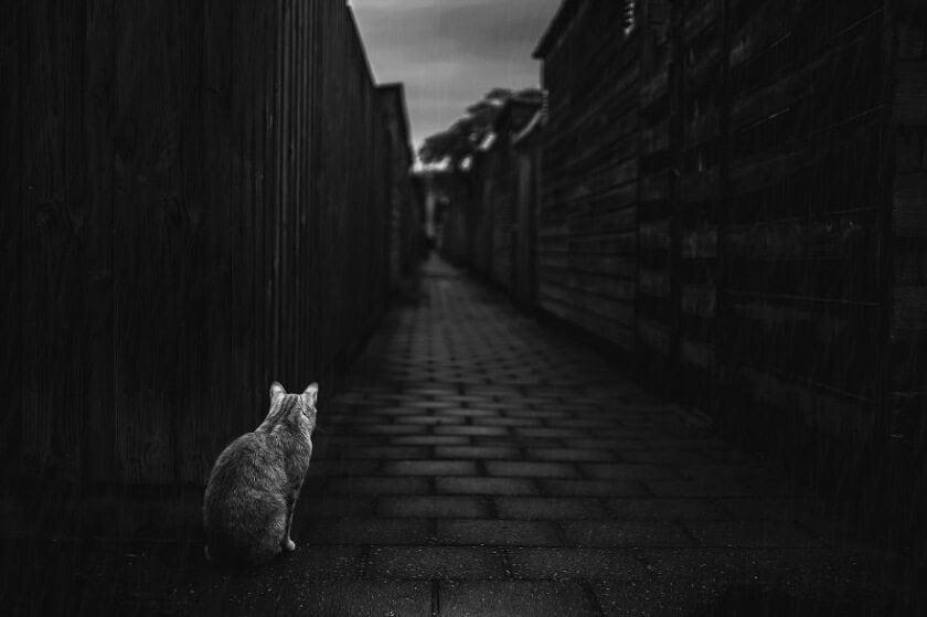 felicity-berkleef-cat-3