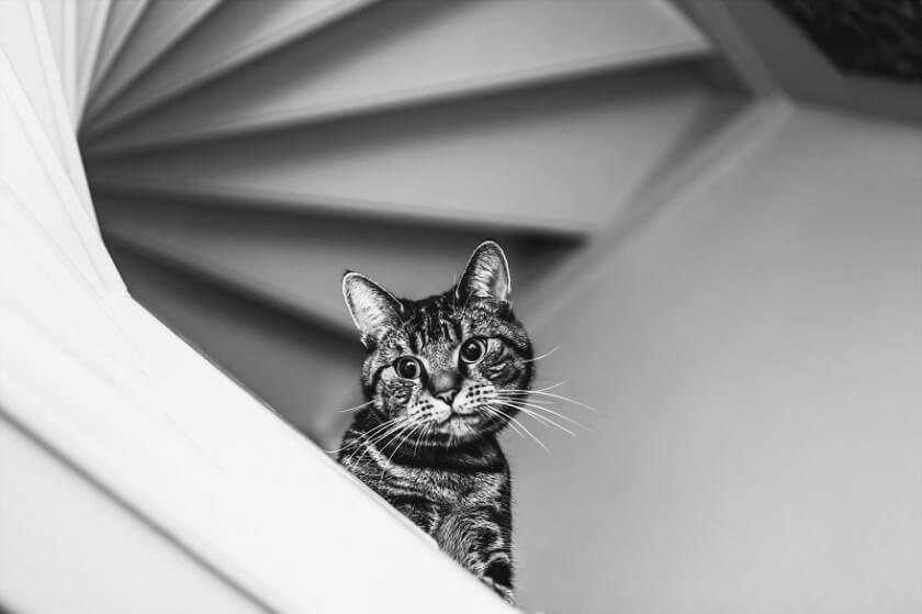felicity-berkleef-cat-4