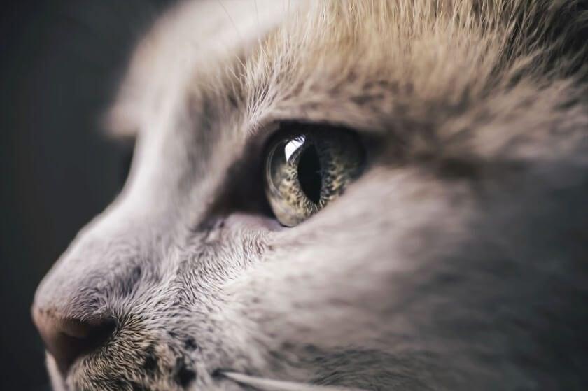 felicity-berkleef-cat-5