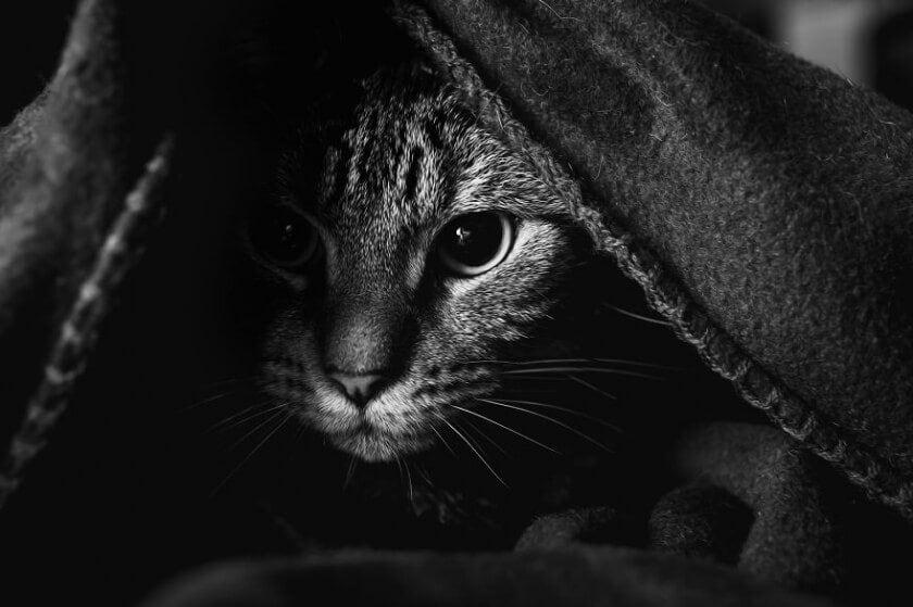 felicity-berkleef-cat-7