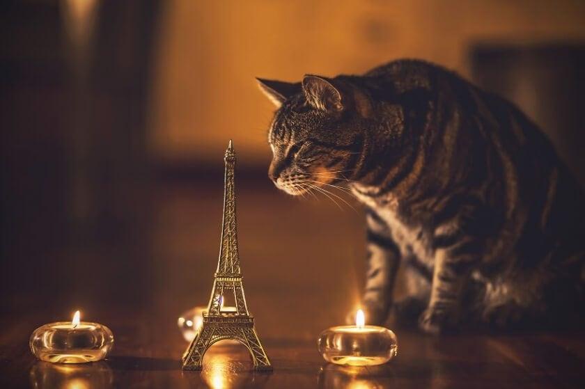 felicity-berkleef-cat-8