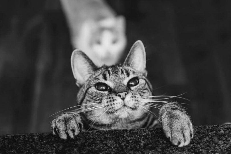felicity-berkleef-cat-9