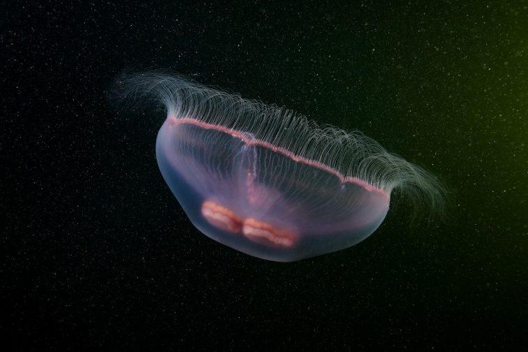 rare sea creatures freeyork100 1