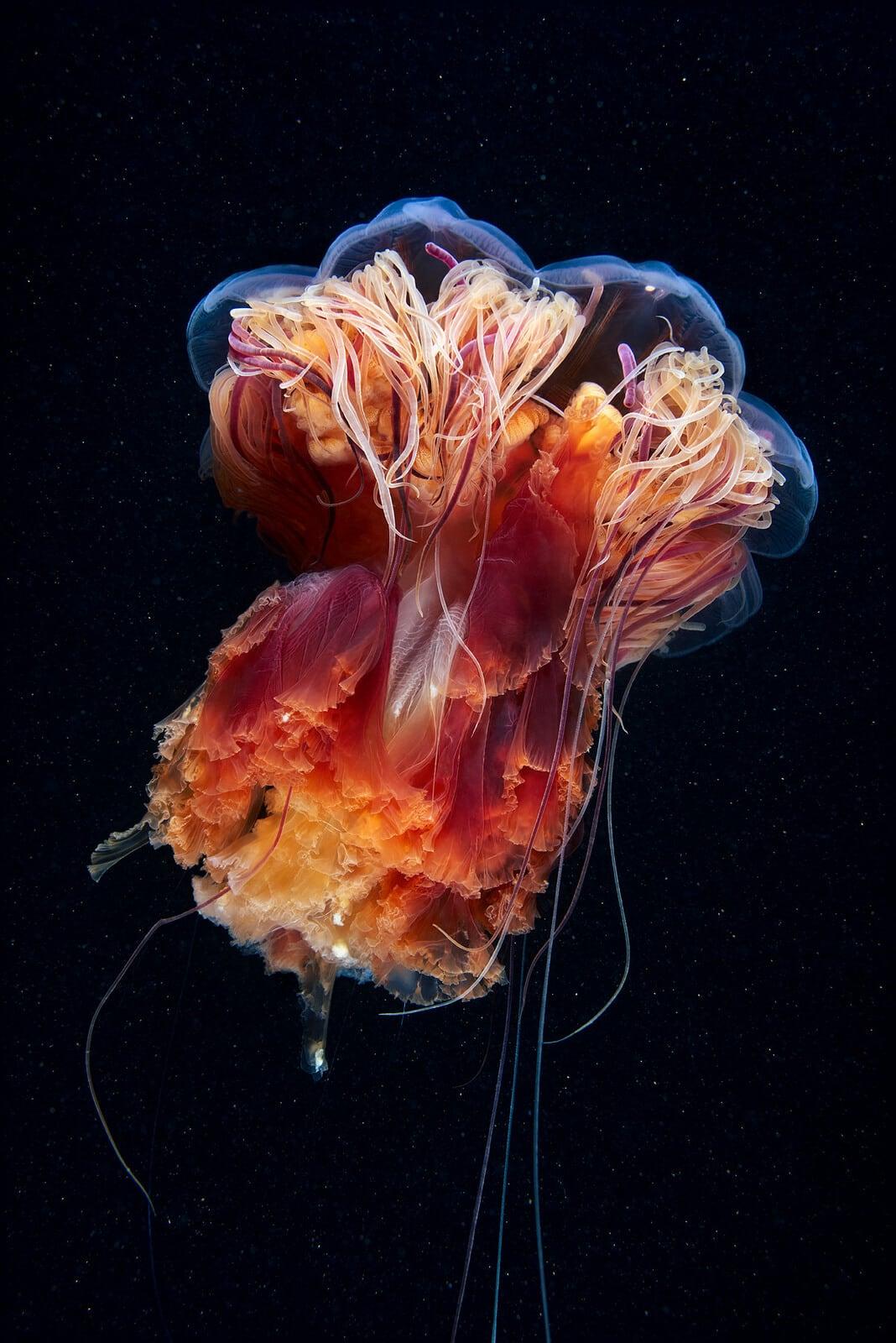 rare-sea-creatures-freeyork104