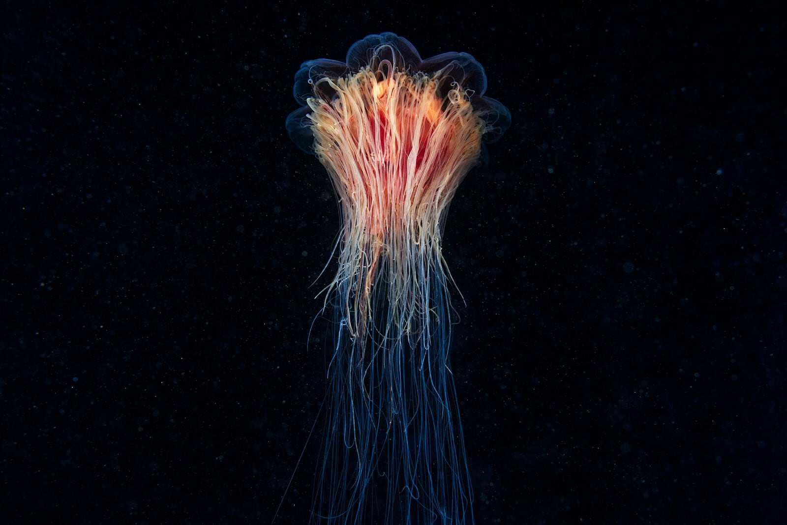rare-sea-creatures-freeyork108