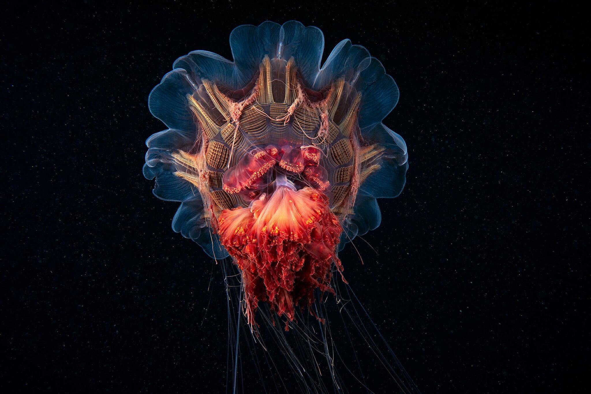 rare-sea-creatures-freeyork112