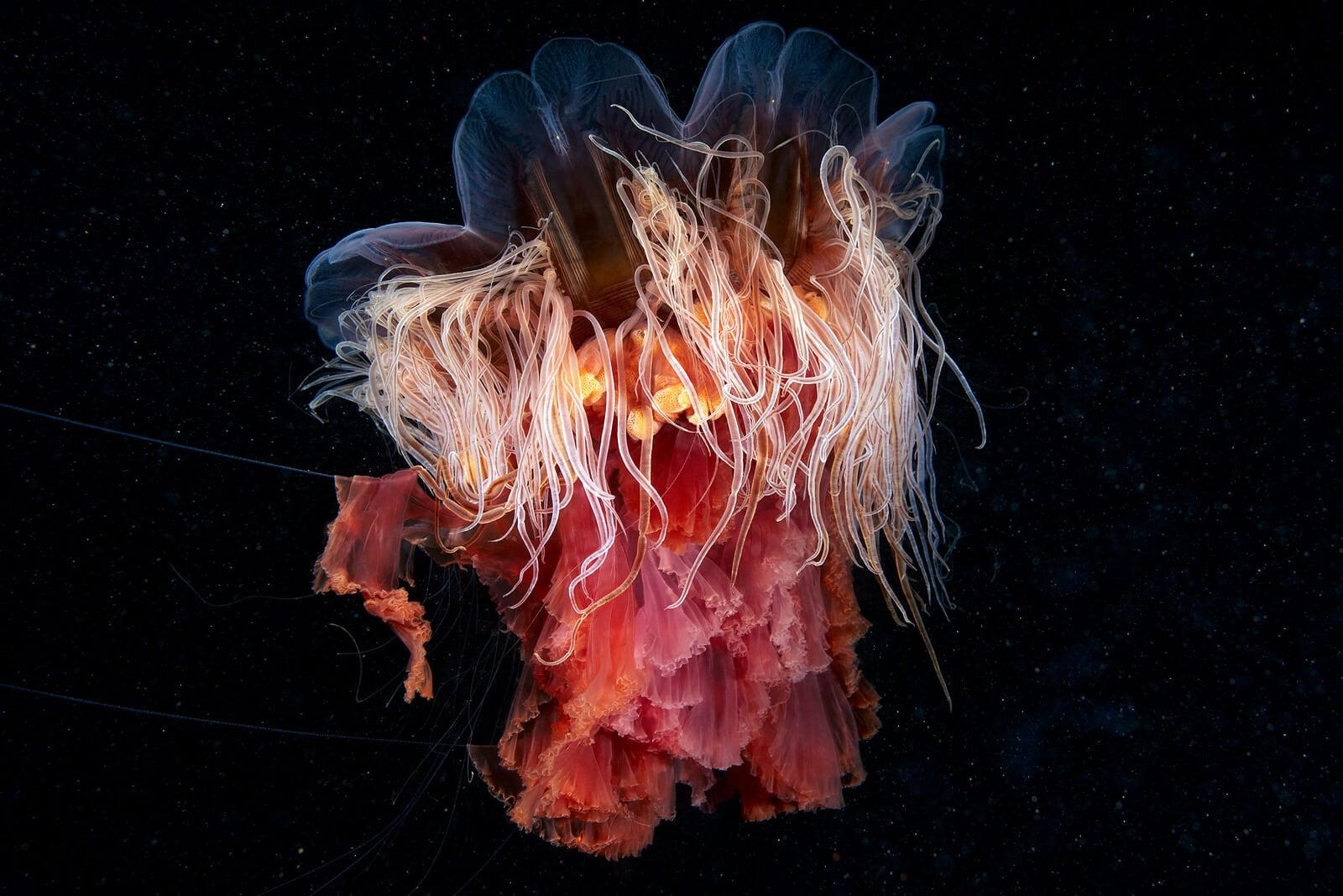 rare-sea-creatures-freeyork113