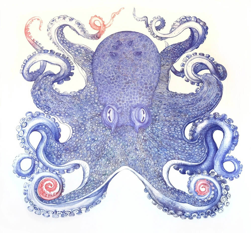 ray-cicin-octopus-freeyork-5