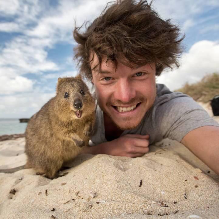 allan-dixon-animal-selfies-freeyork-11
