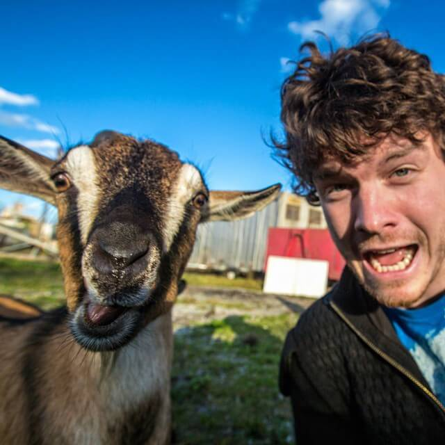 allan-dixon-animal-selfies-freeyork-5