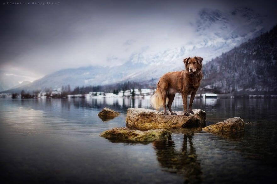 portraits-of-dogs-anne-geier-freeyork-1