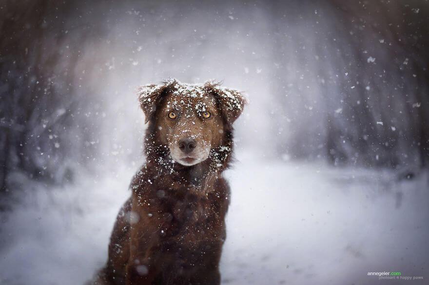 portraits-of-dogs-anne-geier-freeyork-10