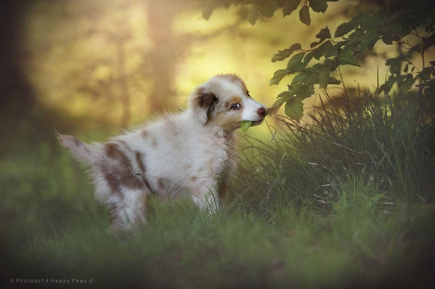 portraits-of-dogs-anne-geier-freeyork-11