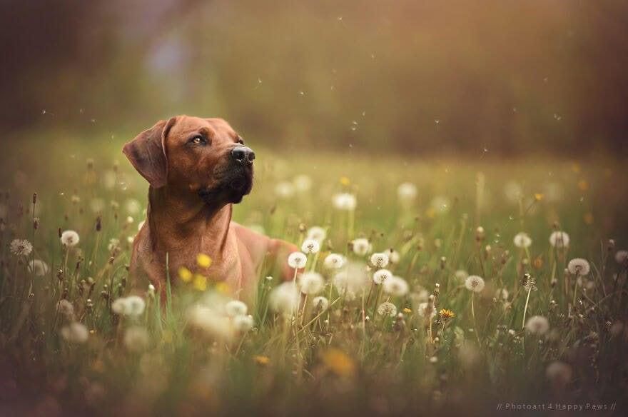 portraits-of-dogs-anne-geier-freeyork-13