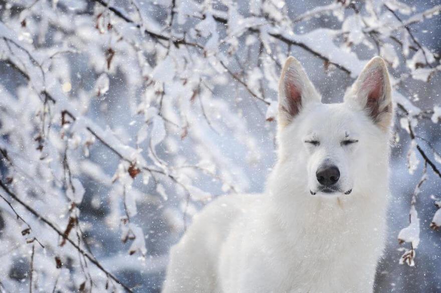 portraits-of-dogs-anne-geier-freeyork-17