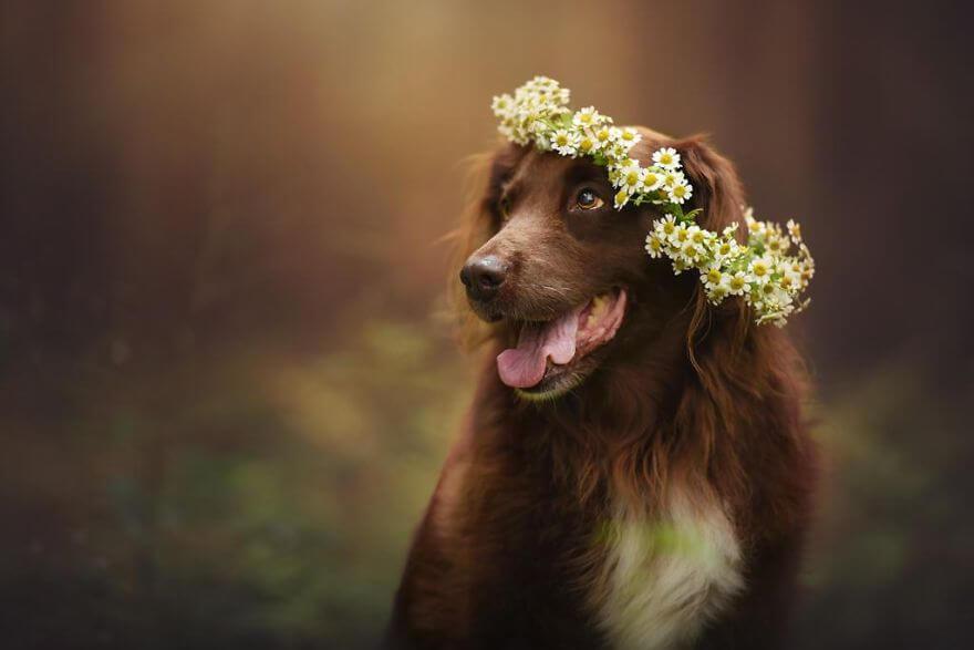 portraits-of-dogs-anne-geier-freeyork-18