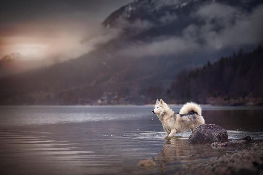 portraits-of-dogs-anne-geier-freeyork-19